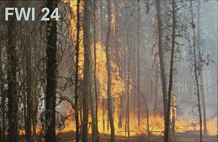Fire Weather Index 24